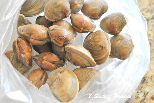 Fresh raw clams sitting on ice in a bag by 2sistersrecipes.com